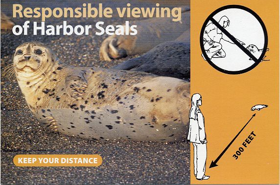 RESPONSIBLE VIEWING OF HARBOR SEALS