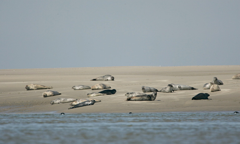 BAY OF SOMME SEALS